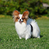 DOG 19 CB0015 01