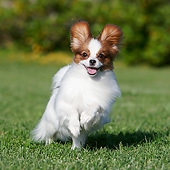 DOG 19 CB0017 01