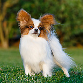 DOG 19 CB0018 01
