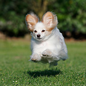 DOG 19 CB0019 01