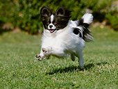 DOG 19 CB0021 01