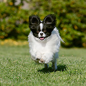 DOG 19 CB0022 01