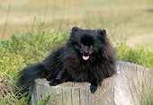 DOG 19 CE0082 01