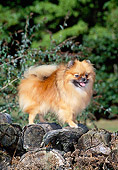 DOG 19 CE0088 01