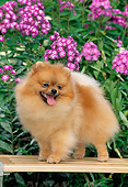DOG 19 CE0089 01