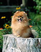 DOG 19 CE0093 01