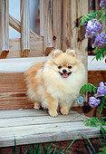 DOG 19 CE0094 01