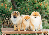 DOG 19 CE0095 01