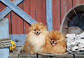 DOG 19 CE0097 01