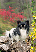 DOG 19 CE0100 01