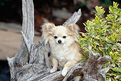 DOG 19 CE0101 01