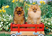 DOG 19 CE0103 01