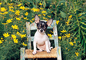 DOG 19 CE0105 01