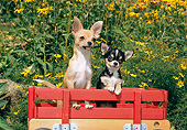 DOG 19 CE0109 01