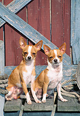 DOG 19 CE0110 01