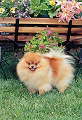 DOG 19 CE0112 01