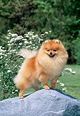 DOG 19 CE0113 01