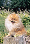 DOG 19 CE0114 01