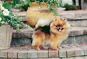 DOG 19 CE0116 01