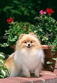 DOG 19 CE0118 01