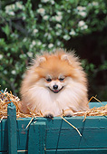 DOG 19 CE0119 01