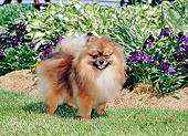 DOG 19 CE0120 01