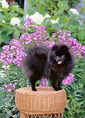 DOG 19 CE0122 01