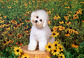 DOG 19 FA0031 01