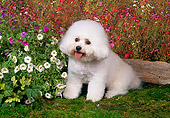 DOG 19 FA0032 01