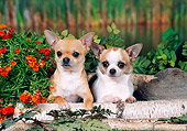 DOG 19 FA0035 01