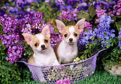 DOG 19 FA0036 01