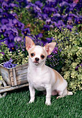 DOG 19 FA0037 01