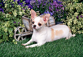 DOG 19 FA0038 01