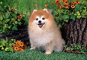DOG 19 FA0039 01