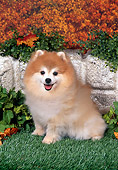 DOG 19 FA0040 01