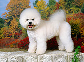 DOG 19 FA0041 01