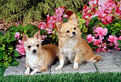DOG 19 FA0042 01