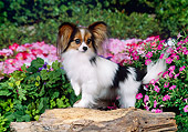DOG 19 FA0043 01