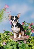 DOG 19 FA0047 01