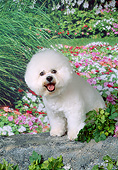 DOG 19 FA0048 01