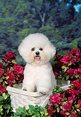DOG 19 FA0050 01