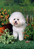 DOG 19 FA0051 01