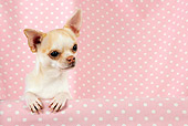 DOG 19 JD0002 01