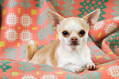 DOG 19 JD0003 01