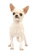 DOG 19 JE0004 01