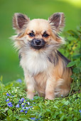 DOG 19 JE0007 01