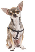 DOG 19 JE0010 01