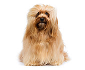 DOG 19 JE0017 01