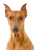 DOG 19 JE0023 01