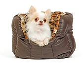 DOG 19 JE0026 01